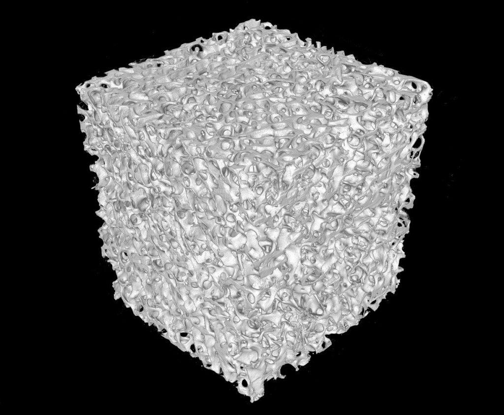 ウシ海綿骨3D画像